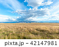 広大なニュージーランドの風景 42147981