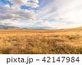 広大なニュージーランドの風景 42147984
