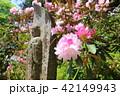 奈良 シャクナゲ咲く岡寺 42149943