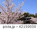 京都 春の勧修寺 42150030