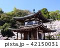 京都 春の勧修寺 42150031