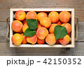 Apricots in wooden box close-up 42150352