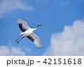 鶴 丹頂 青空の写真 42151618