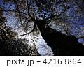 桜 春 花の写真 42163864