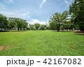 新小岩公園 公園 新緑の写真 42167082