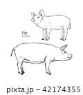 ぶた ブタ 豚のイラスト 42174355