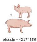 ぶた ブタ 豚のイラスト 42174356