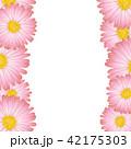 ヒナギク フラワー 花のイラスト 42175303