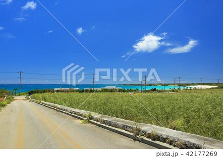 沖縄 伊良部島の風景 さとうきび畑と渡口の浜の青い海とパラグライダー 42177269