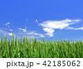 青空 水田 田んぼの写真 42185062