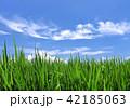 青空 水田 田んぼの写真 42185063