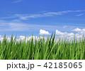 青空 水田 田んぼの写真 42185065