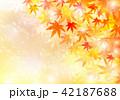 背景 紅葉 輝きのイラスト 42187688