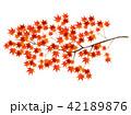 紅葉 葉 秋 アイコン  42189876