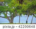 ニューカレドニア アンスバタのビーチ ヌーメア 42200648