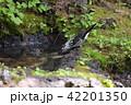 鳥 雄 烏の写真 42201350
