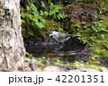 鳥 雄 烏の写真 42201351