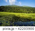 湿原の至仏山 42203900