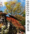 菊花まつり 42205660