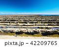 青島 日南海岸 鬼の洗濯岩の写真 42209765