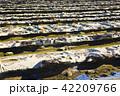 青島 日南海岸 鬼の洗濯岩の写真 42209766