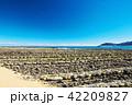 青島 日南海岸 鬼の洗濯岩の写真 42209827