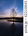 シルエット 水辺の木 青紫 縦 42210645