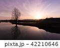 シルエット 水辺の木 紫 横 42210646