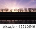 シルエット映り込み 夕暮れ 並木道 紫 42210649
