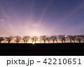 シルエット 夕暮れ 並木道 紫 42210651