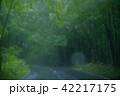 雨の日 42217175