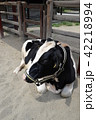 牛 42218994