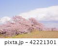 桜 桜の木 春の写真 42221301