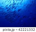 ギンガメアジの群れ 42221332