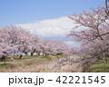 桜 桜の木 春の写真 42221545