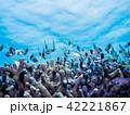 海中 魚 熱帯魚の写真 42221867