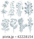 植物 ベクター ハーブのイラスト 42228154