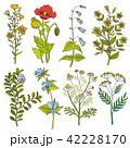 フラワー 花 ベクターのイラスト 42228170