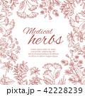 ハーブ フラワー 花のイラスト 42228239