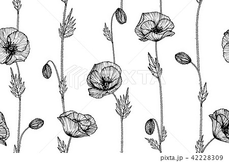 seamless poppy flower pattern background のイラスト素材 42228309