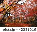 紅葉 京都 秋の写真 42231016