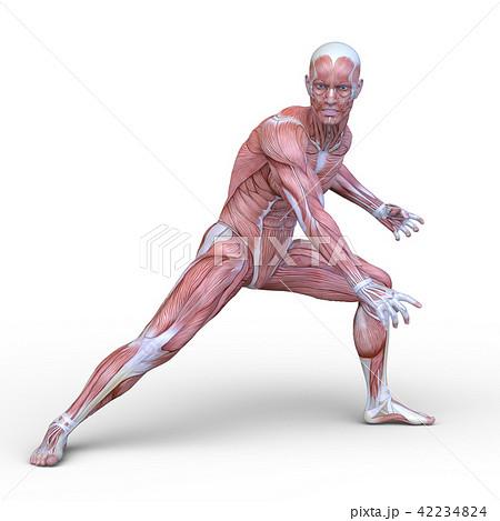 男性人体模型 42234824