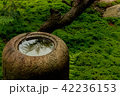 旧三井家下鴨別邸 庭 庭園の写真 42236153