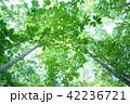 森林 林 晴れの写真 42236721