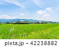 田園 風景 晴れの写真 42238882