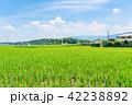 田園 風景 晴れの写真 42238892