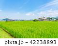 田園 風景 晴れの写真 42238893