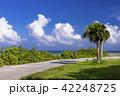 石垣島の公園 42248725
