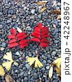 赤と黄色の落葉 42248967