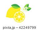 レモン 42249799